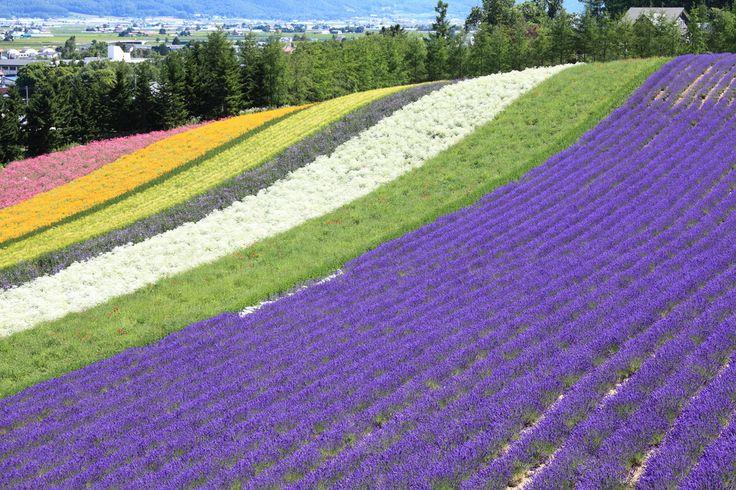 As 15 paisagens mais coloridas do mundo - Campos de Flores, Hokkaido, Japão.