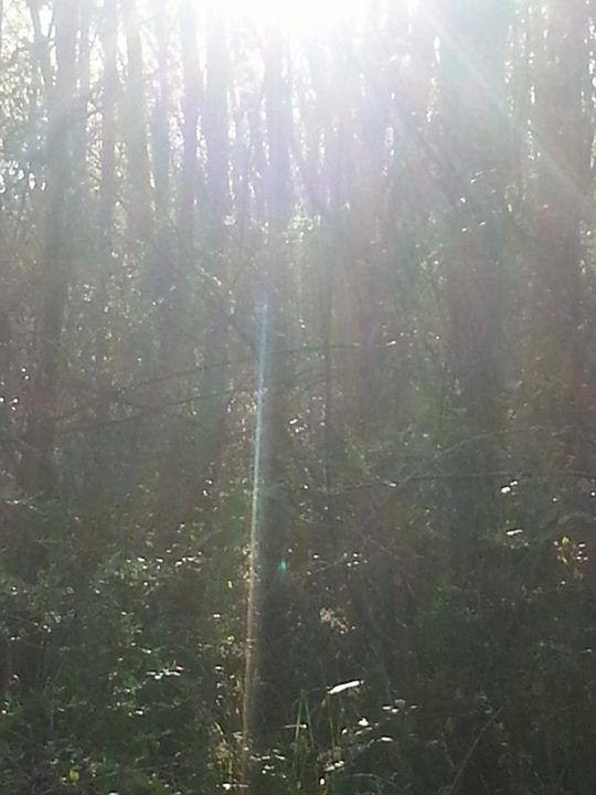 Pablo Topa Ariel Abramovich: La frondoza vegetacion de nuestro delta, hoy después de las lluvias !!!!! Hermoso
