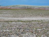 Collecting Rocks At The Agate Beds, Buffalo Gap National Grasslands Near  Interior, SD.