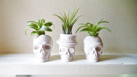 Macetas mini calavera, planta de aire cráneo plantador, dapper cráneo, Calavera pirata, sombrero bigote de monóculo