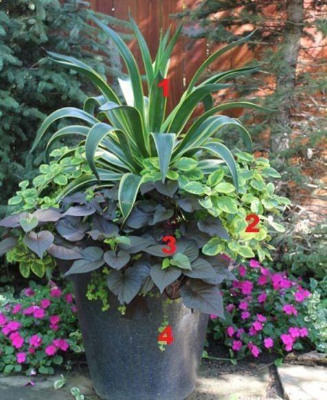 Gorgeous container #garden.
