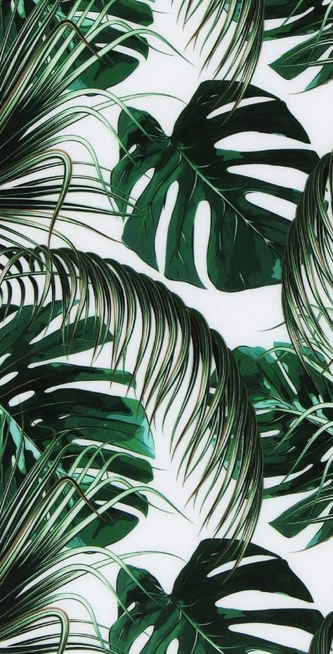 Green leaves aesthetic wallpaper aesthetic wallpaper iphone aesthetic background…