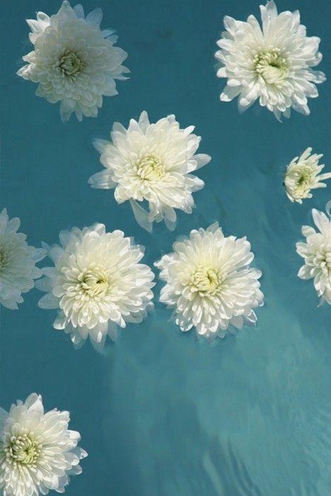 White Flowers Floating