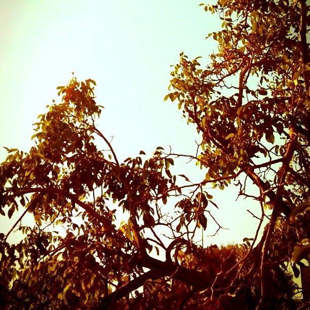 #trees #autumn