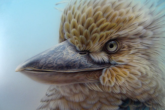 """""""Blue-winged Kookaburra"""" by Christopher Pope   Redbubble"""