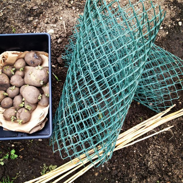Introducing the easiest way ever to grow your own potatoes.