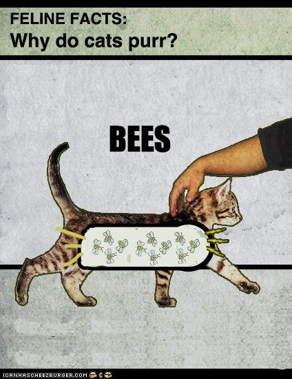 Why Cats Purr