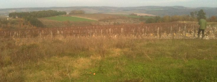How to Find a Vineyard in Burgundy France (or not). Visiting a Vineyard at Tonnerre