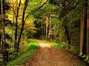 Waldspiele