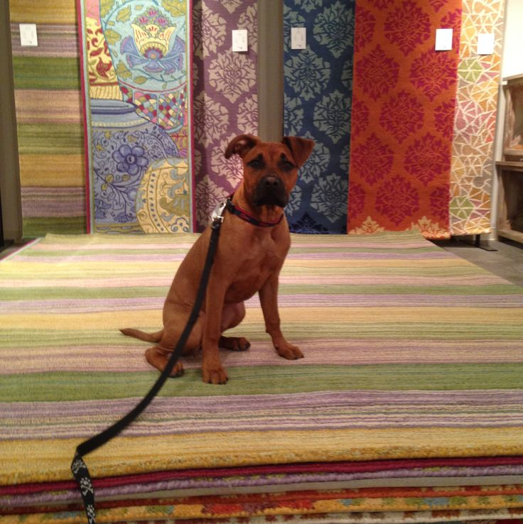 It's here! Our Labor Day Outlet Sale! Our favorite boxer mix Lowie thinks the #LaborDay #sales are pawtastic! #furryfriends #boxer #lab #boxador #rugs