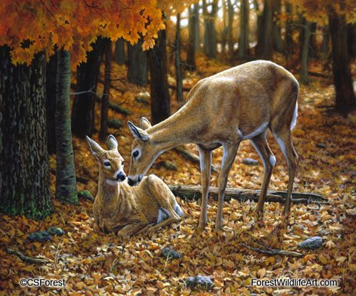 Oil painting of a whitetail doe and fawn by wildlife artist Crista Forest. ForestWildlifeArt.com - Fine Art Prints starting at just $25. Notecards also available. Get them here: http://fineartamerica.com/profiles/crista-forest.html