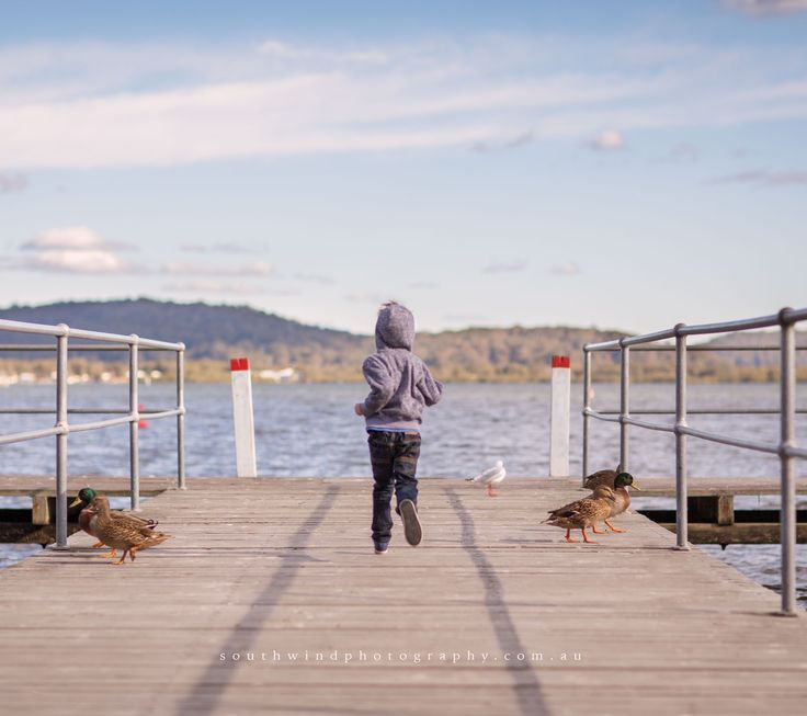 Little boy run on jetty with ducks under blue sky.
