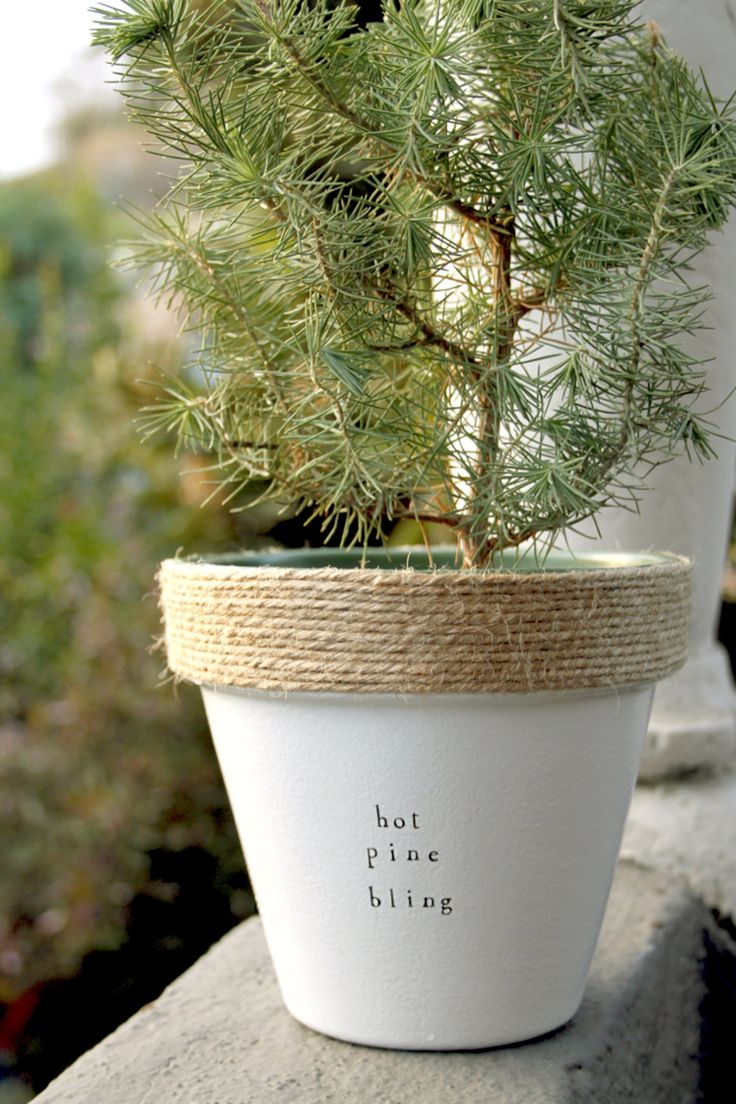 Hot Pine Bling by PlantPuns on Etsy