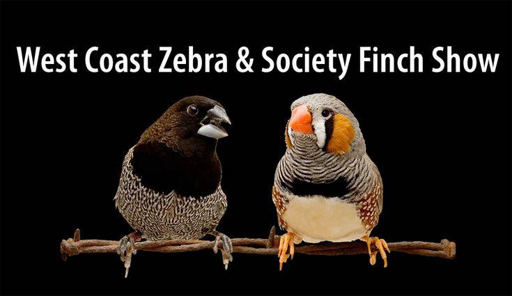West Coast Zebra & Society Finch Show (Sacramento) #parrots #parrot #petbirds #companionparrot #birdclub