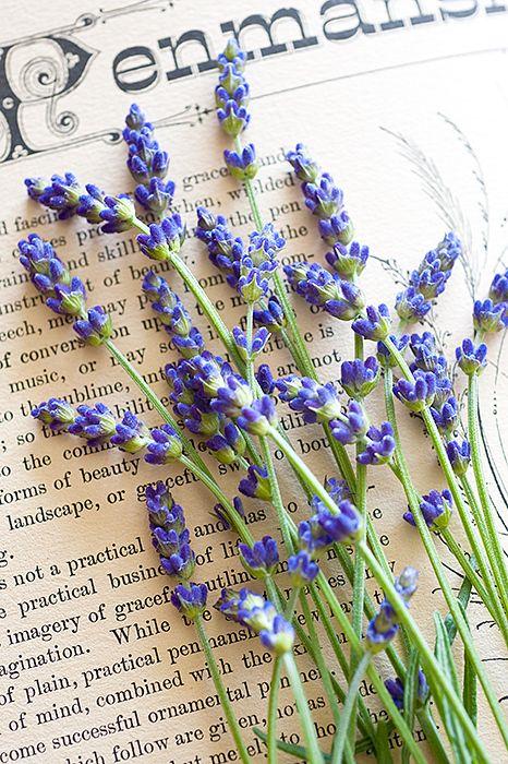 Pretty photo of lavender on a book.