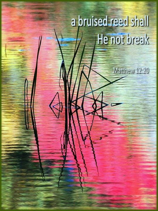 A bruised reed shall He not break.