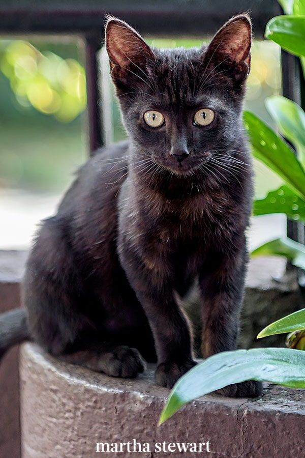 The Best Cat Breed For You Based On Your Personality Type In 2020 Best Cat Breeds Cat Breeds Cats