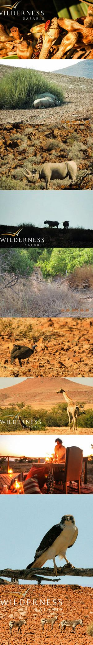 We Are Wilderness - June highlights from Desert Rhino Camp. Click on the image for more pictures.
