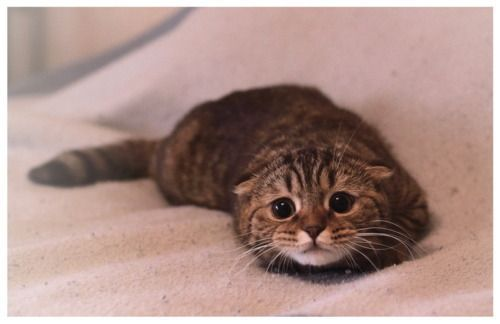My otter impression.Kitty Cat, Real Life, Sadness Cat, The Face, Cute Kitty, Kittens, Big Eye, Boots, Animal