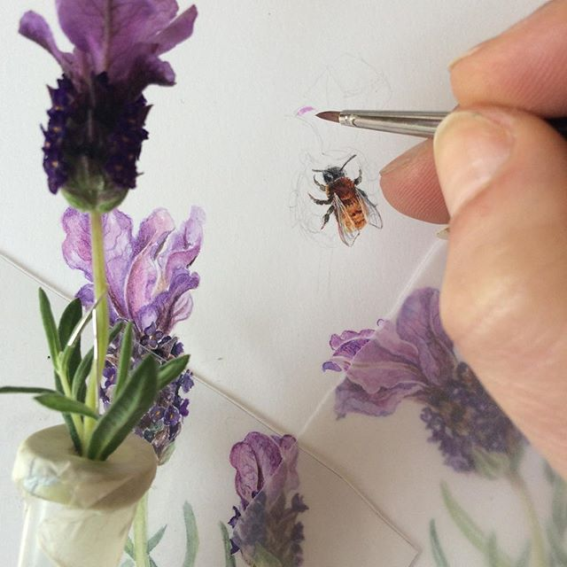 I decided to add a teeny tiny bee, the Tawny Mining bee, Andrena fulva, to my lavender. It was thought to be extinct in Ireland but was rediscovered in 2012. There is now a call out to anyone who spots this little solitary bee in their garden by the National Biodiversity Data Centre in Waterford. It's only 1cm in size, nests in the ground and is red and furry. It is quite common in the UK, but very rare in Ireland. If you spot it, take a photograph and contact them. Happy Earth Day!