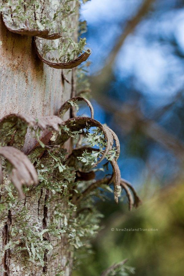 Lichen Covered Bark Peeling Off Gum Tree Closeup A Level Art Tree Lichen