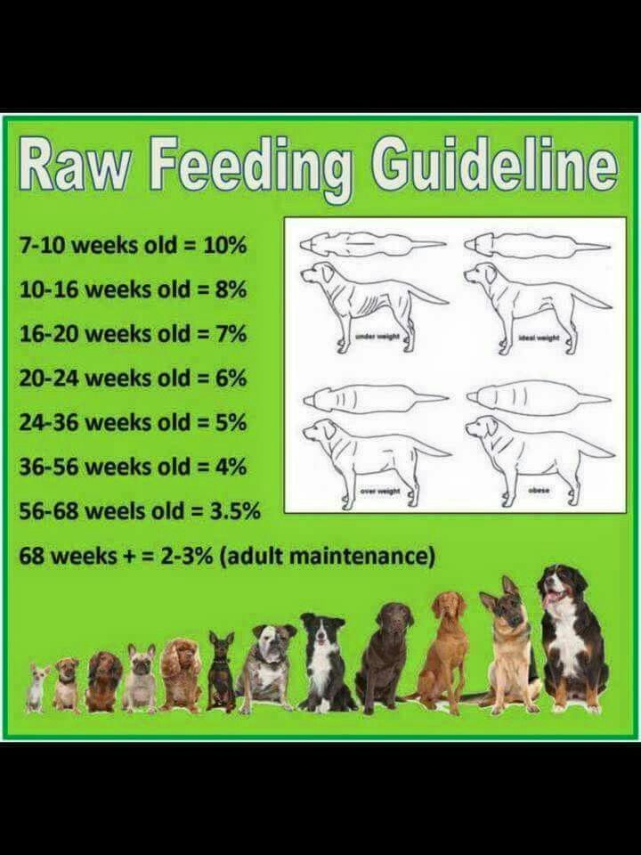 What Dog Food Has A Good Percentage Of Meat
