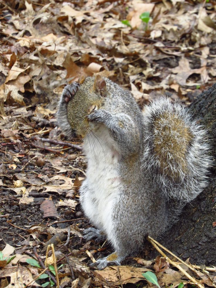 shy squirrel, Central Park New York