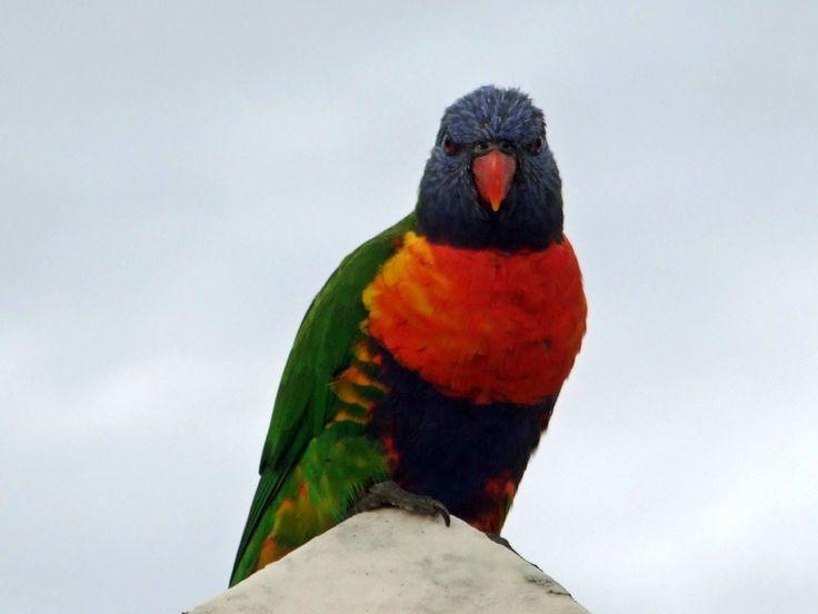 Free Image, Humming, Bird, Free Photo, Wildlife, Nature, Fauna, Animals