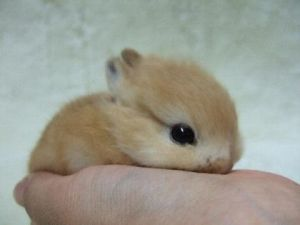 Is that worlds smallest bunny or what?