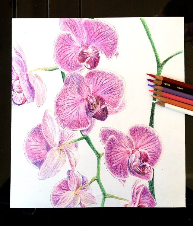 Orchid Study Colored Pencils Colored Pencils Colour Pencil