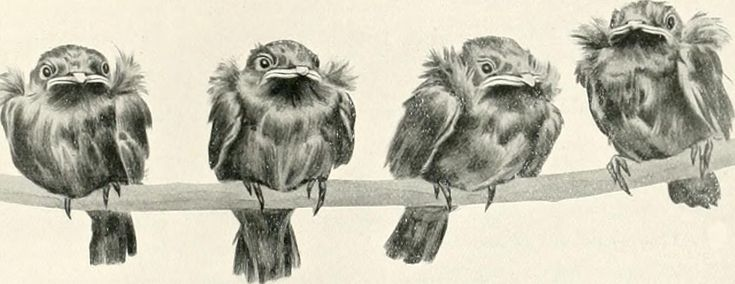 "Image from page 290 of ""Nests and eggs of birds found breeding in Australia and Tasmania"" (1901)"