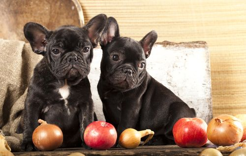 We love to share food with our dogs, and since fruits and vegetables are healthy for us, we often assume they're healthy for our pets too. This is often the case, but that certainly doesn't mean it's always the case. …