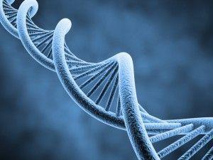 Quelle est l'influence réelle de la #GÉNÉTIQUE sur notre #PHYSIQUE ? Retrouvez ma réponse à LA #QUESTION DE LA SEMAINE sur www.CHRISTOPHECANO.com.  http://www.christophecano.com/quelle-est-linfluence-reelle-de-la-genetique-sur-notre-physique/  Pour plus d'infos : MP ou par mail contact@christophecano.com  Bonne lecture !