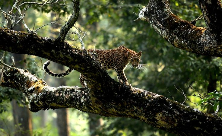 Kabini, Karantaka, India: Courage doesn't always roar by Nagarjun Ram, shortlisted for Young Photographer of the Year 2014.Society of Biology photography award shortlist – in pictures | Environment | The Guardian