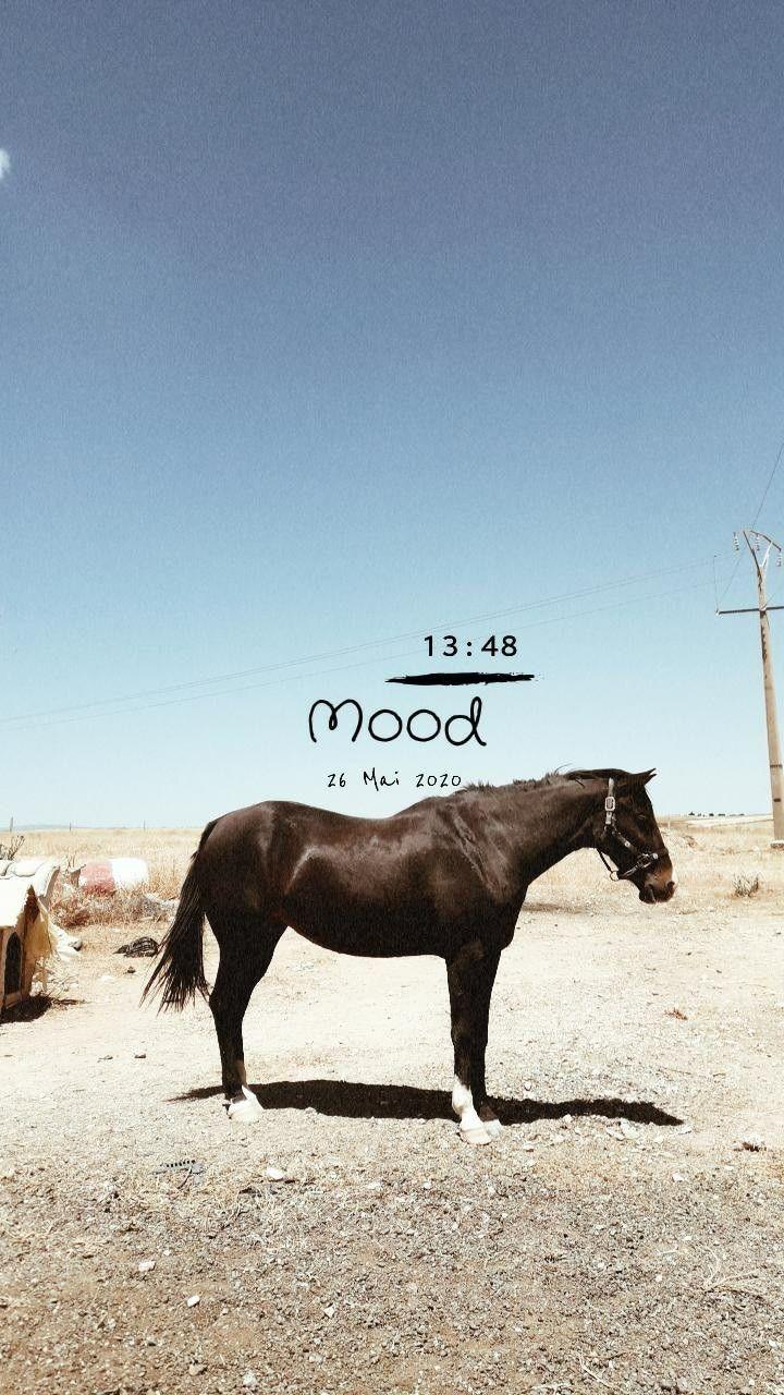 أسماء ستوري سناب طبيعة جمال قهوة حب حصان خيل Instagram Story Instagram Moose Art