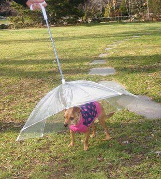 Pet Umbrella (Dog Umbrella) Keeps your Pet Dry and Comfotable in Rain, by Happy Pet Travel, http://www.amazon.com/dp/B000T0JUE8/ref=cm_sw_r_pi_dp_j-32qb0K6R8CW