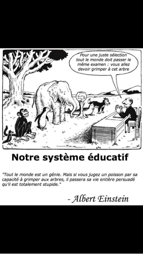 """Différenciation: """"El mismo exámen para todos:  tendrán que subir ese árbol..."""""""