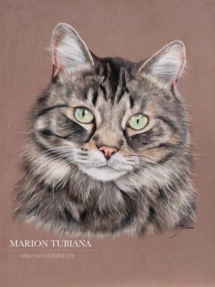 Marion Tubiana Cat art, Cat artwork, Pet portraits