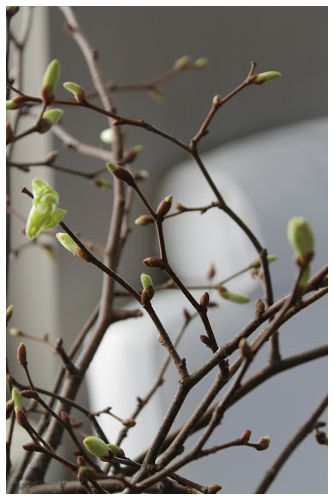We're thrilled at the first sighting of buds and flowers