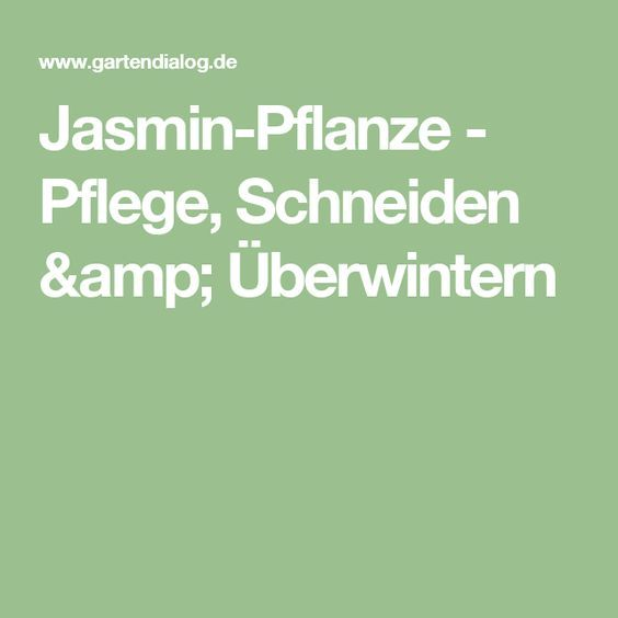 Jasmin-Pflanze - Pflege, Schneiden & Überwintern