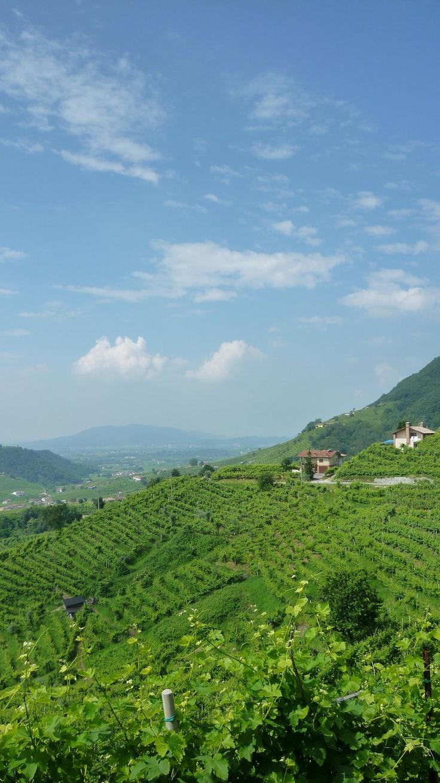Valdobbiadene land of Prosecco