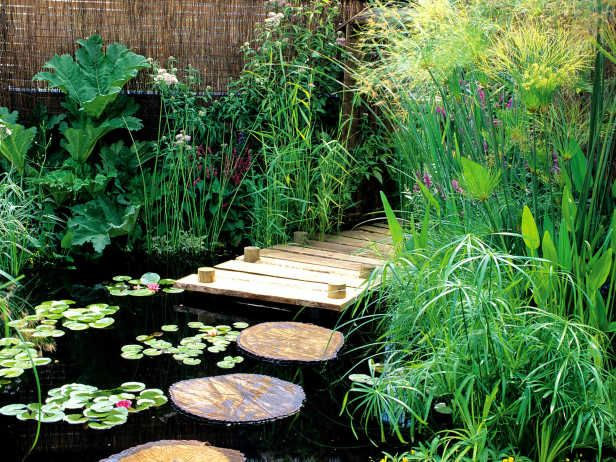 Exotic foliage surrounds the edges of this small backyard pond.
