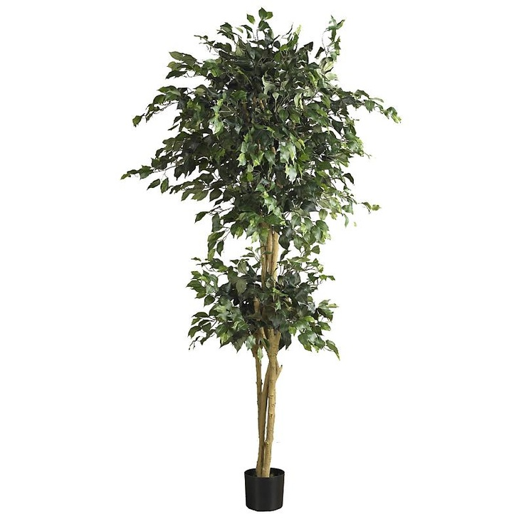 this double ball ficus 6u0027 silk tree is beautifully designed and will never have a - Ficus Trees