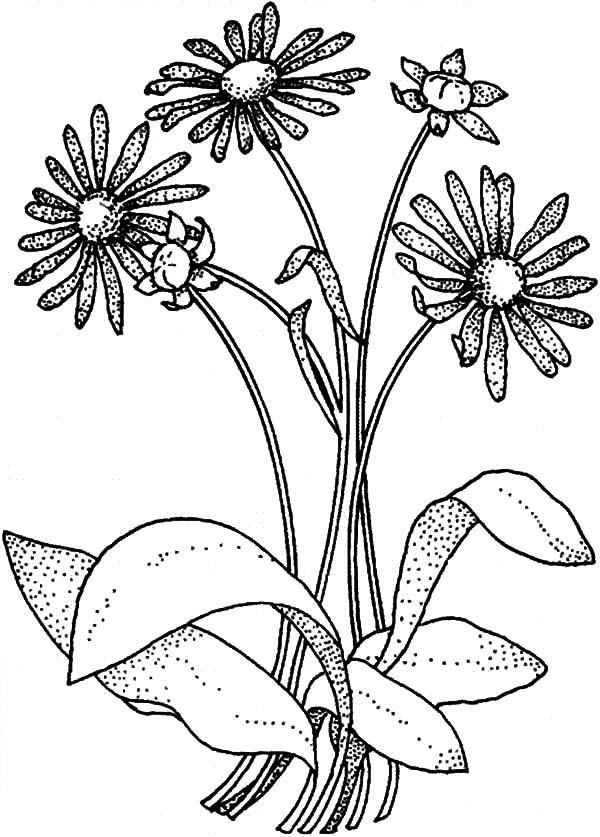 Read Morea Is For Aster Flower Coloring Pages Flower Coloring