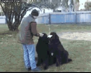 Funny images of the day (65 pics) Smart Dog (Gif) ️LO