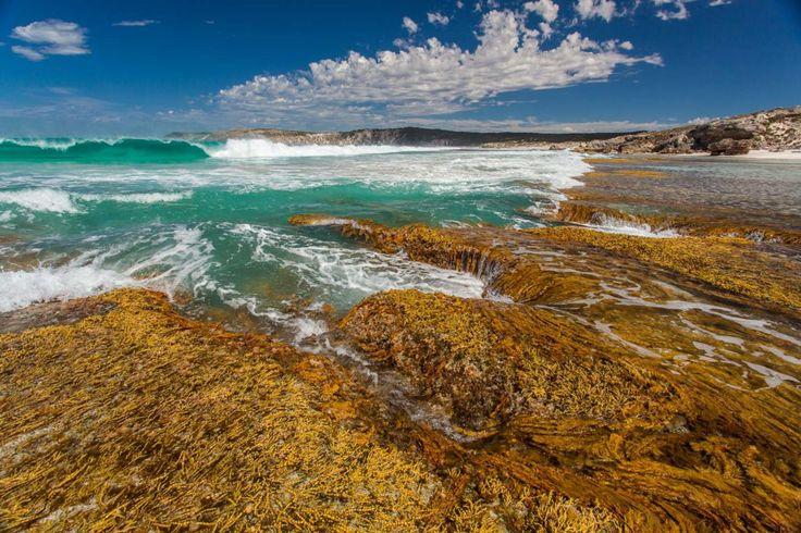 SALA 2017 - Kangaroo Island Artists at the National Wine Centre | Fine Art Kangaroo Island