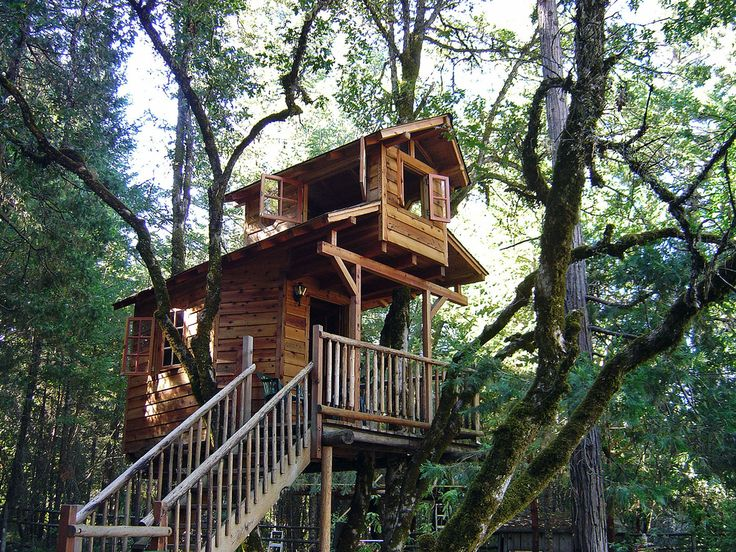 Nice Tree Houses 888 best tree house images on pinterest | architecture, places and