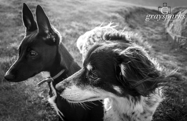 Windswept! by graysparks photography, Scotland