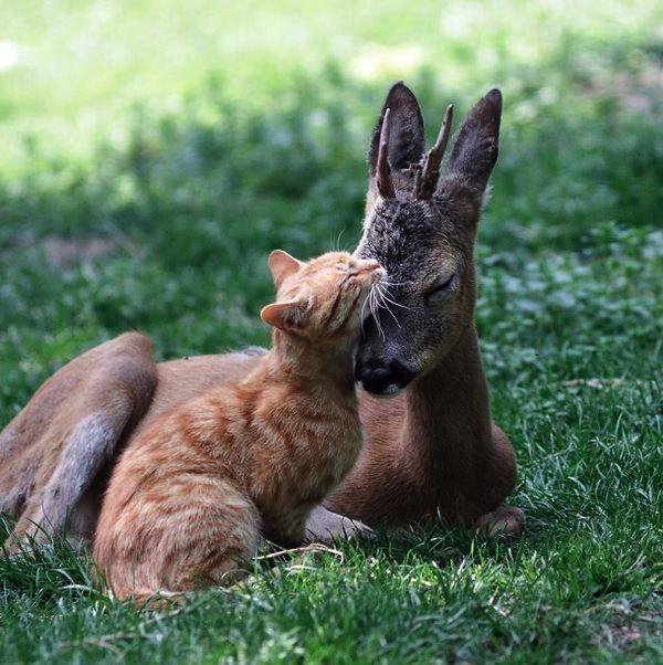 Un hymne à l'amour inter-espèces en 30 photographies touchantes | Buzzly