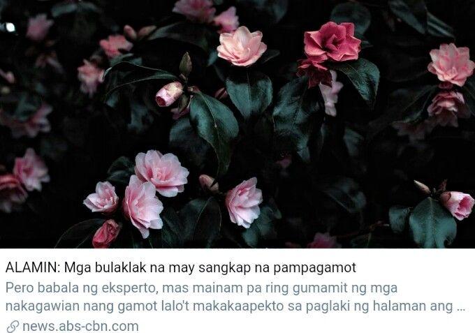 ALAMIN: Mga bulaklak na may sangkap na pampagamot   Health
